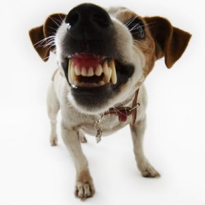 fear of dogs, dog phobia, cynophobia, scared of dogs, panic around dogs