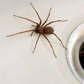 fear, phobia, anxiety, spiders, arachnophobia